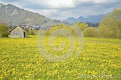 beautiful yellow field landscape - photo #28