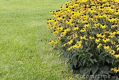 Yellow flowers on the grass