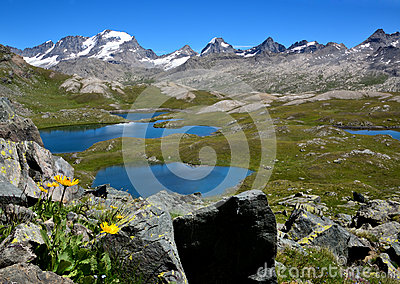 Yellow Flowers, lakes and mountains in the Nivolet plan - Gran Paradiso National park - Italy
