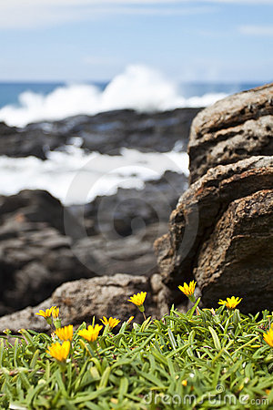 Yellow flowers on the rocks by the sea
