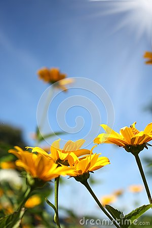 Yellow flowers sky with sun