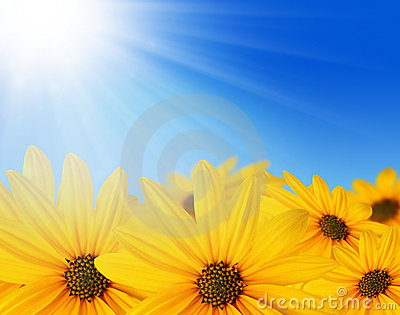 Yellow flowers in sun