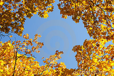 Yellow foliage on blue sky