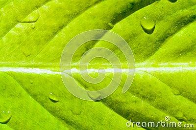 Yellow fresh leaf