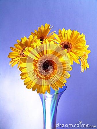 Free Yellow Gerbera Daisies Royalty Free Stock Photo - 1971785