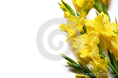 Yellow gladiolus on a white background on the right.