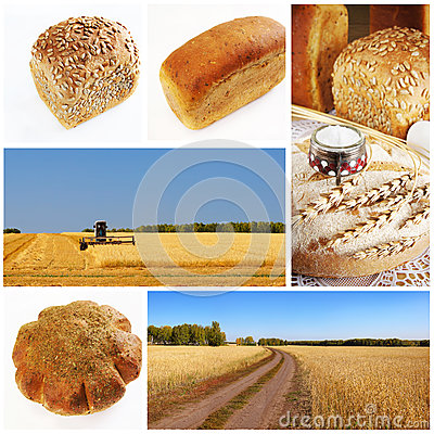 Yellow grain field and bread collage