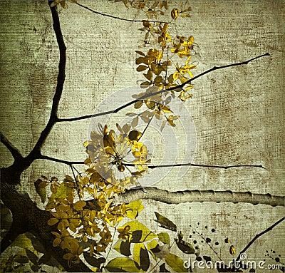 Free Yellow Grunge Kerala Blossom Royalty Free Stock Photography - 13004127