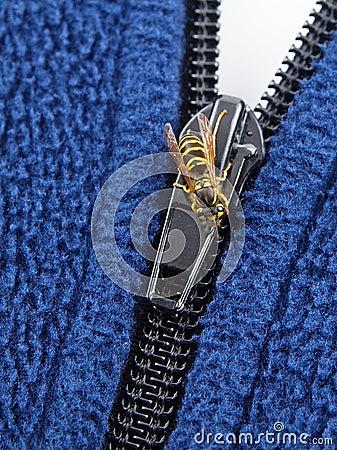 Yellow Jacket on Zipper