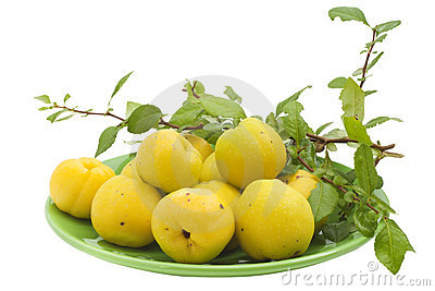 The Yellow Japanese  Quince Stock Photography - Image: 15936692