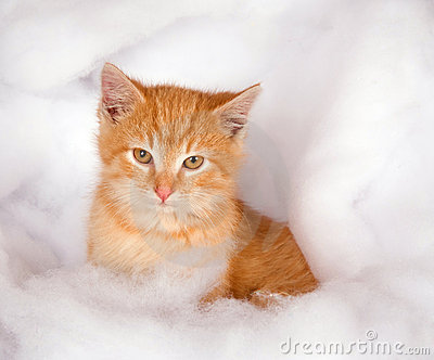 Yellow kitten in fluffy fake snow