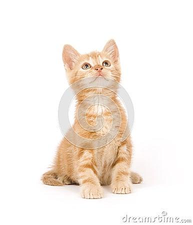 Yellow kitten ready to play