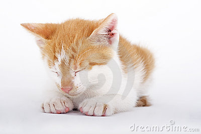 Yellow kitten sleeping