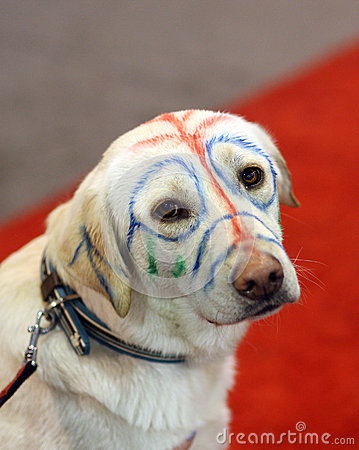 Yellow Labrador with painted face