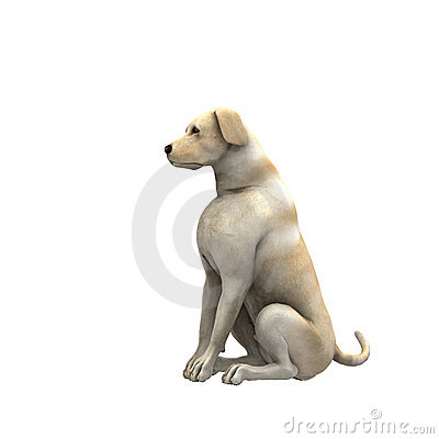 Free Yellow Labrador Retriever - 01 Royalty Free Stock Photography - 2206347