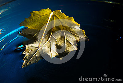 Yellow leaf on blue water