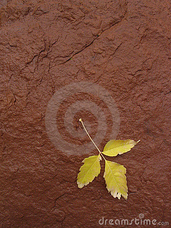 Yellow Leaf on Red Rock