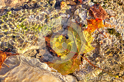 Yellow leaf under the water.