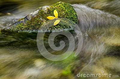 Yellow leafs resting on moss