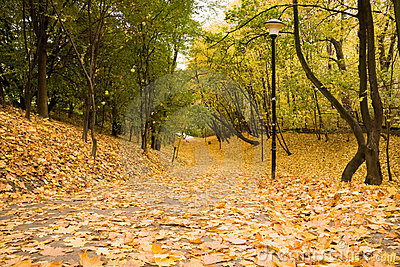 Yellow leaves on path in park