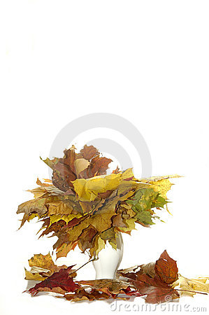 Yellow leaves in vase