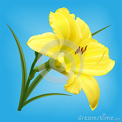Free Yellow Lily Flower On Light Blue Background Royalty Free Stock Image - 28354426