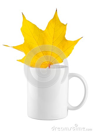 Yellow maple leaf in the cup
