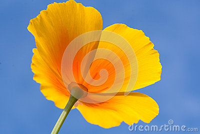 Yellow meadow flower on a blue sky