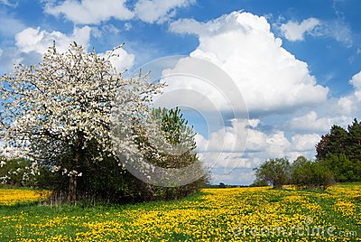 Yellow meadow and sky with beautiful clouds