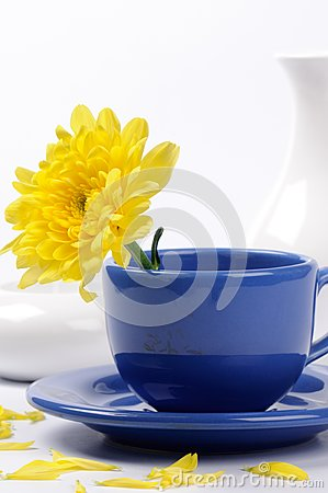 Yellow mums in a teacup
