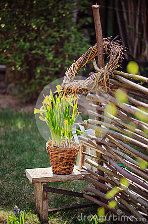 Free Yellow Narcissus In Pot, Osier Wicker Fence And Tools In Early Spring Garden Stock Photography - 49258792