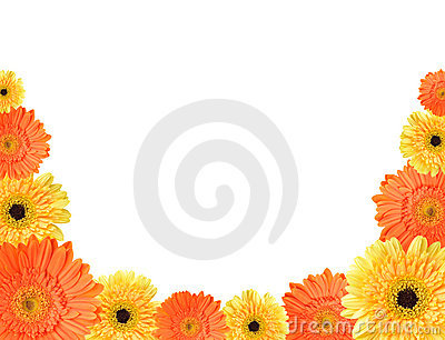 Yellow and orange daisy frame
