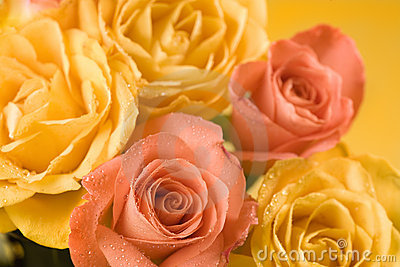 Yellow and orange roses background
