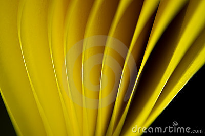 Yellow paper edge background