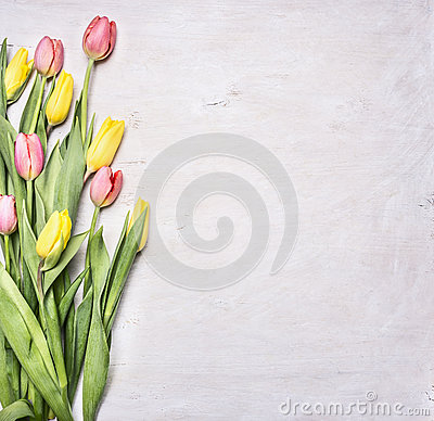 Free Yellow, Pink Spring Tulips, Laid On A White Wooden Background Border ,place For Text  Wooden Rustic Background Top View Close U Stock Photography - 67865062