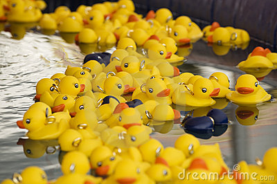 Yellow plastic ducks