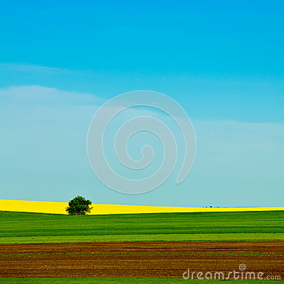 Free Yellow Rapeseed Field Stock Photography - 26884532