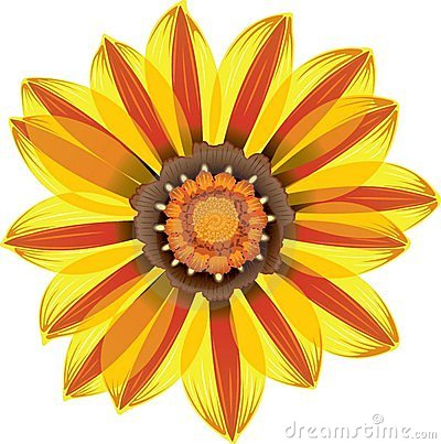 Yellow and Red Daisy Flower