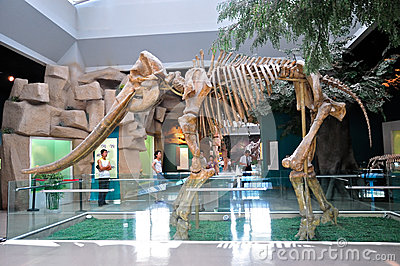 Yellow River Elephant Fossil Editorial Stock Image