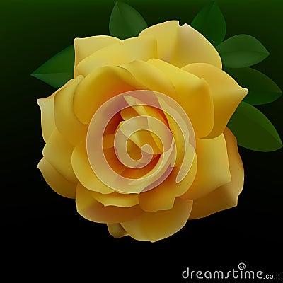 Free Yellow Rose Royalty Free Stock Photo - 14307225