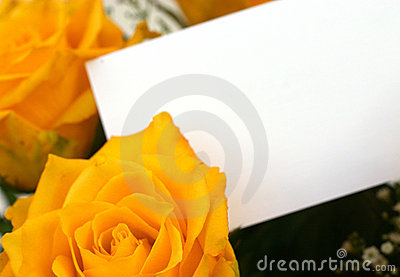 Yellow roses 4