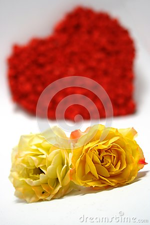 Yellow roses against red heart on background