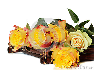 Yellow roses on a white background