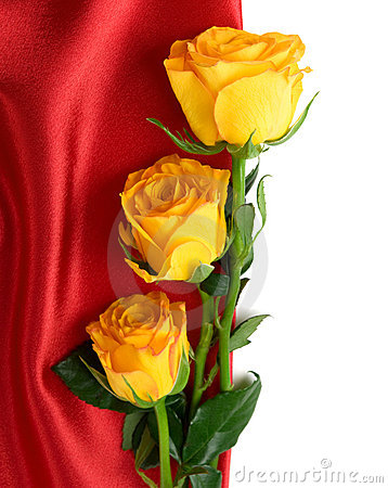 Yellow roses on the red satin