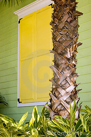 Yellow Shutters with Palm Trunk