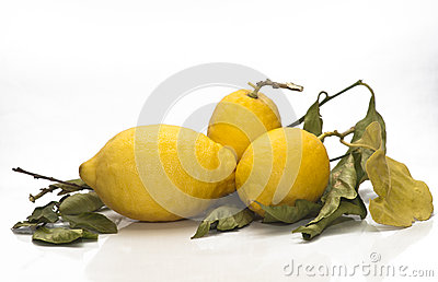 Yellow sicilian fresh lemons