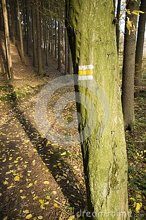 Yellow sign on a tree