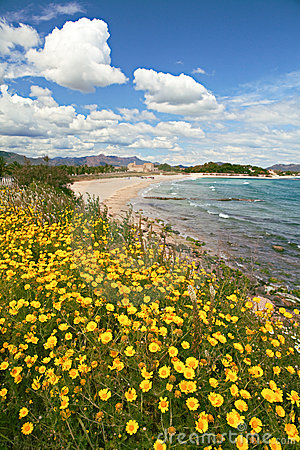 Yellow spring flowers on beach