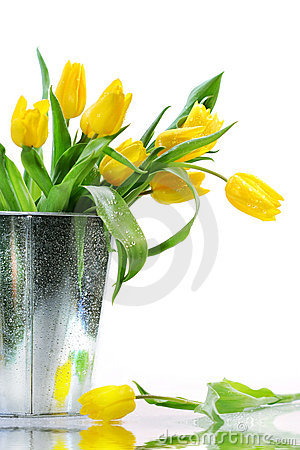 Free Yellow Spring Tulips Stock Images - 2194564