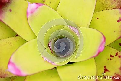 Yellow succulent